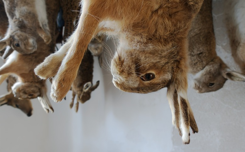 hanging rabbits animal abuse - The Data Tribune