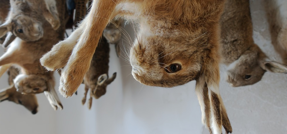 hanging rabbits animal abuse - The Data Tribune